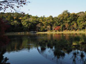 勾玉池の紅葉