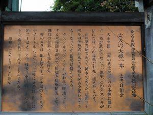 太夫の大樟の説明板(桑名市太夫)